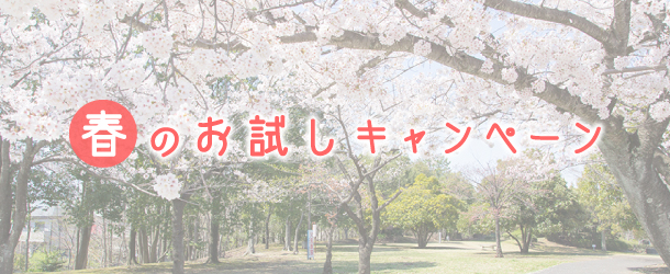 ホームページ制作|春のお試しキャンペーン